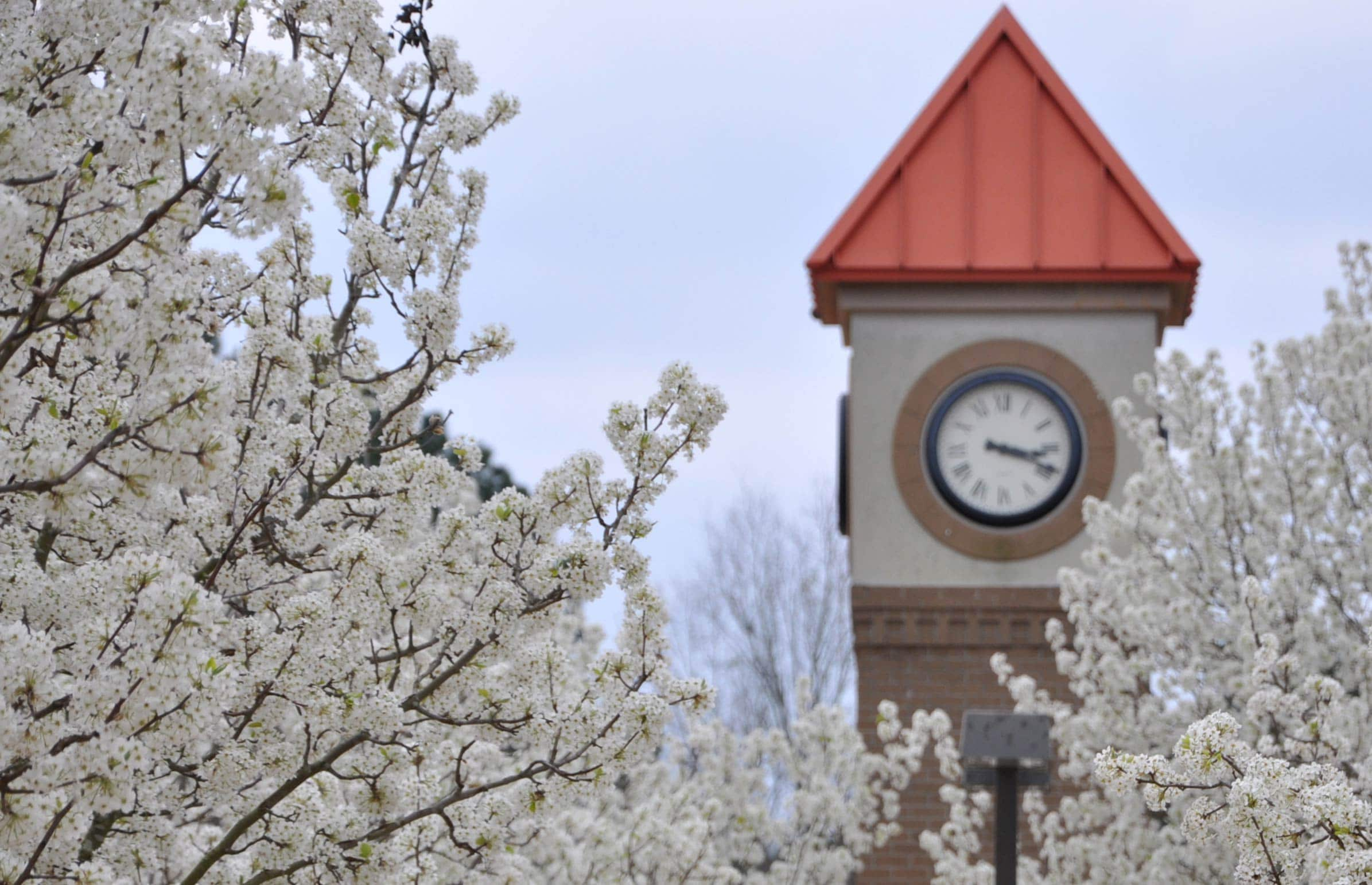 Flowers blooming with clock tower in background